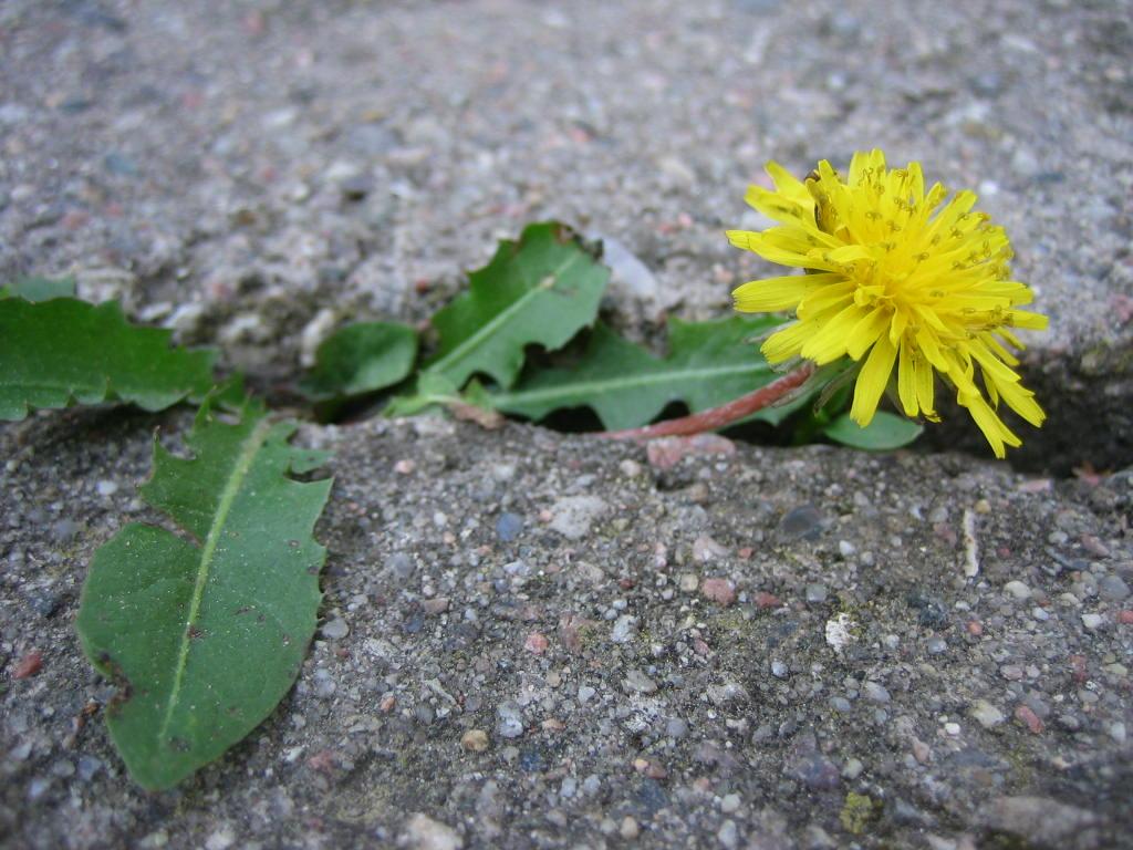 resilienz und resilienzforderung uber die lebensspanne